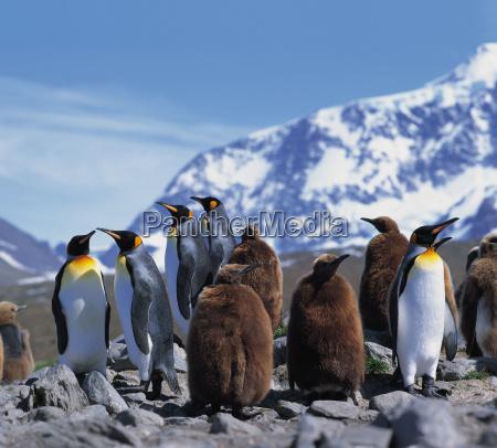 freddo pinguini antartico ghiaccio avventura itinerante