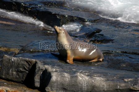 fauna meditazione australien down under entspannung