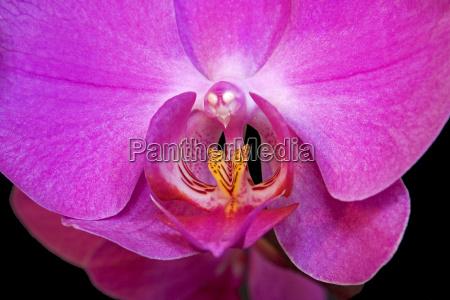 fiore fioritura faccia erotico porpora esotico