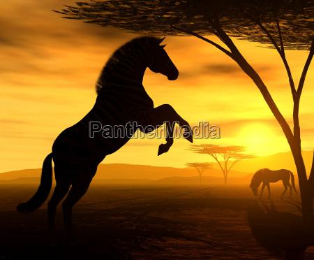 african spirit vii