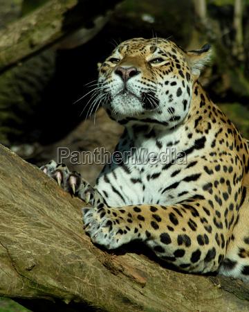 luce animale mammifero tronco animali solitario