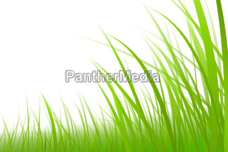 illustrazione erba grafica prato