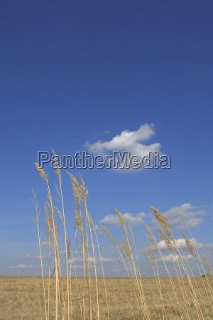 agricolo agricoltura essen cielo firmamento paesaggio