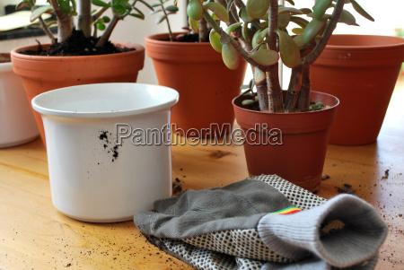 piantare seminare fioriera giardinaggio terriccio umtopfen