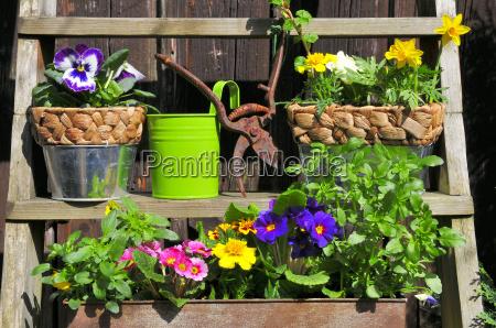scala scale giardino piantare seminare pasqua