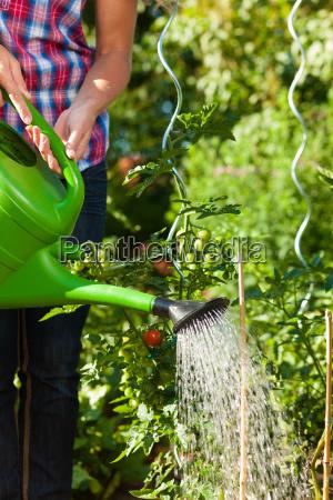 donna giardino estate giardinaggio giardini versare