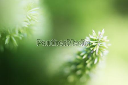 piante sparse sfondo