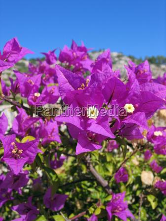 fiore fioritura viola senza nuvole pianta