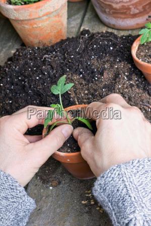 mano mani giardino piantare seminare verde