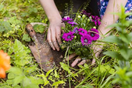 fiori piantare