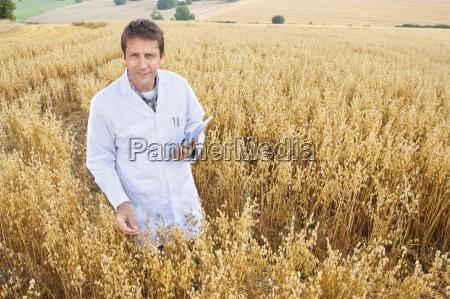 scienziato esaminando avena raccolto nel campo