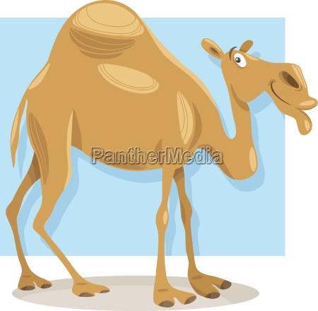 animale asia africa cammello illustrazione dromedario