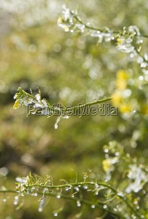 inverno fioritura fiorire freddo campo flora