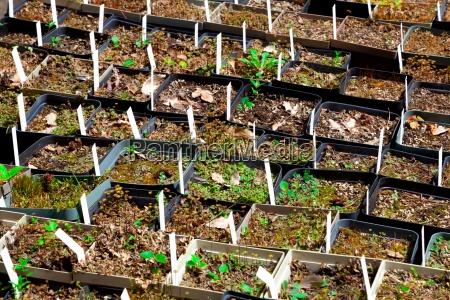 ambiente giardino verde agricoltura botanica primavera