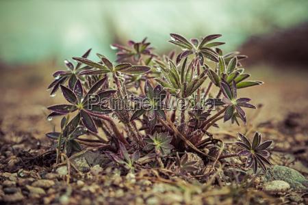verde fauna foglie ghiaia primavera porpora