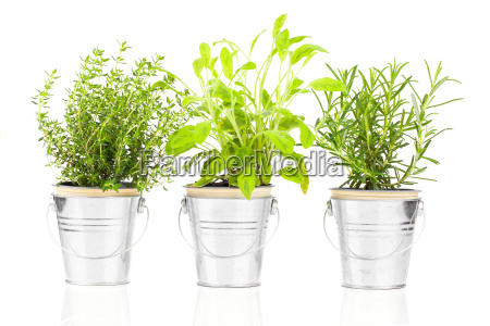cibo spezia opzionale giardino verde sapore