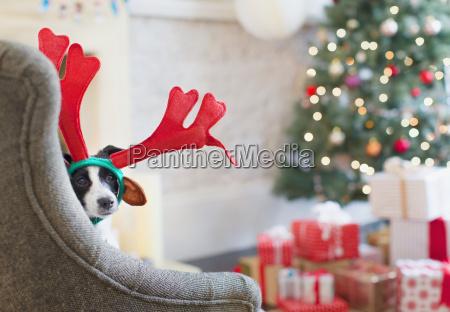 cane ritratto indossando corna di renna