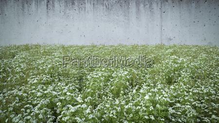 cleaver crescente di fronte al muro