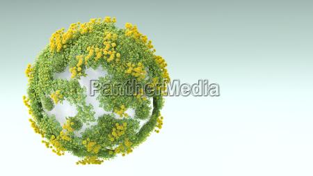 ambiente pietra sasso fiore pianta fioritura