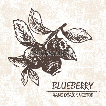 blu cibo foglia bio dolce arte