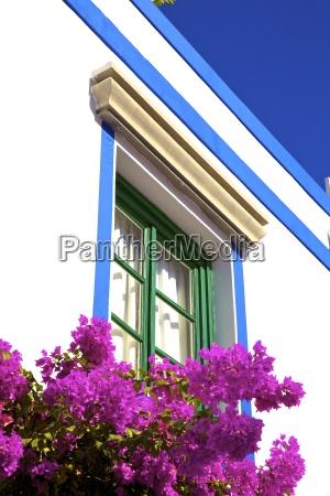 viaggio viaggiare architettonico colore fiore pianta
