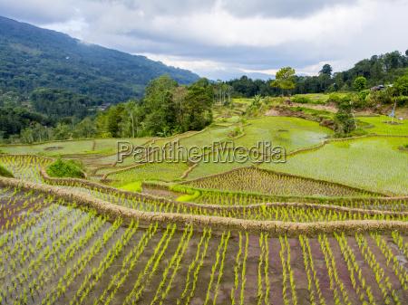 viaggio viaggiare agricolo colore albero asia