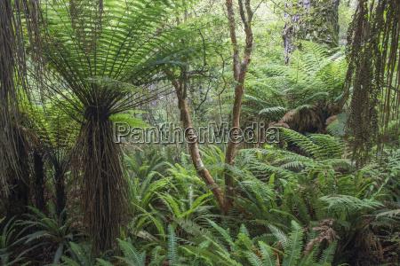 felci che crescono in foresta pluviale