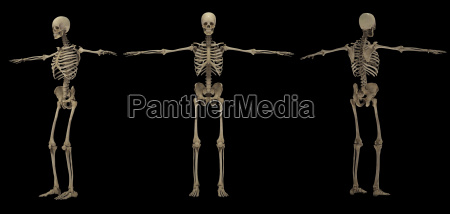 rendering 3d del sistema scheletrico umano