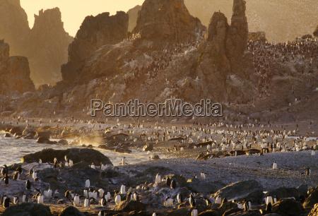 viaggio viaggiare animale uccello tramonto orizzontale
