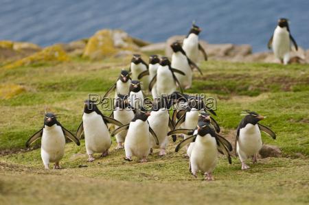 andare animale uccello orizzontale pinguino allaperto