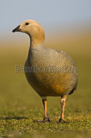 animale uccello allaperto fotografia foto natura