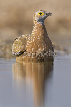 animale uccello africa namibia allaperto fotografia