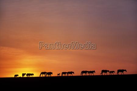orizzonte asia tramonto mongolia orizzontale allaperto