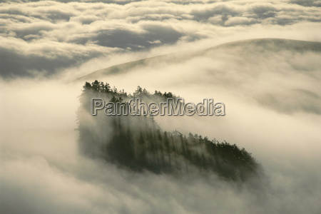 albero nuvola flora stati uniti damerica