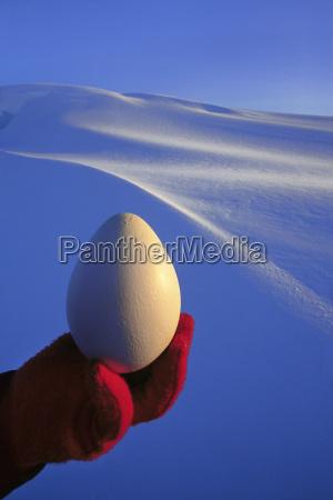 animale uccello freddo pinguino allaperto fotografia