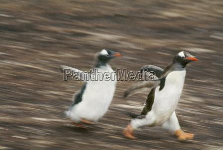animale uccello orizzontale pinguino allaperto vista
