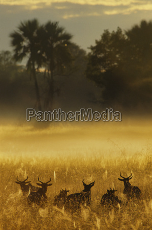 animale mammifero africa allaperto alba fotografia