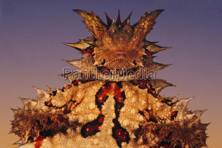 primo piano close up deserto animale