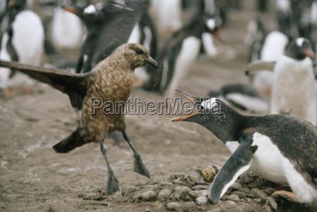 combattimento guerra conflitto animale uccello orizzontale
