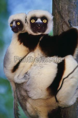 animale mammifero allaperto fotografia foto perpendicolare