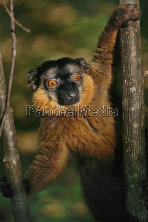 albero animale mammifero flora allaperto fotografia