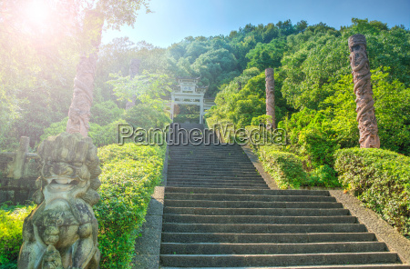 viaggio viaggiare colore albero asia leone