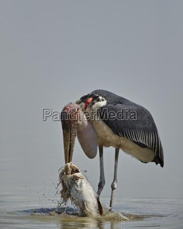 viaggio viaggiare colore uccello africa pesce