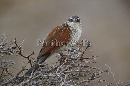 viaggio viaggiare colore albero uccello africa